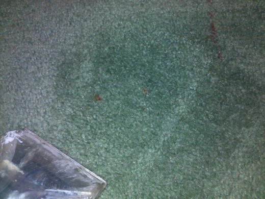 Best Homemade Carpet Cleaner For Homes With Pets