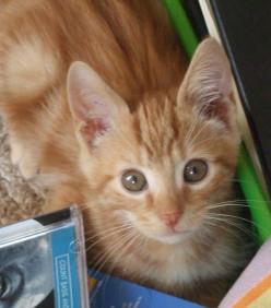 Wonderful New Kitten Brother for Skeeter Cat