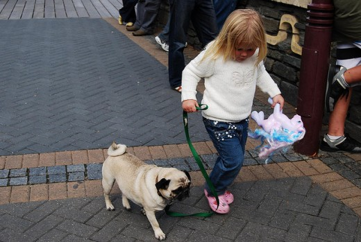 Pugs are patient and gentle with children.