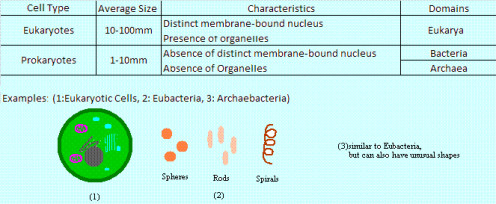 Types of Cells: Eukaryotes and Prokaryotes