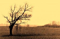 The tree apart