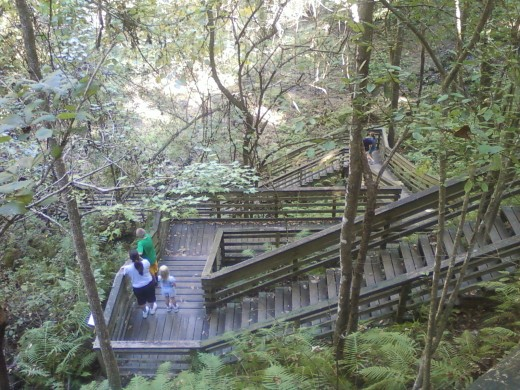 The boardwalk, Devil's Millhopper, Gainesville, Florida. It is quite a steep descent and reasonably physically demanding coming back up.  The boardwalk might not be suitable for an older person or someone who is physically disabled.