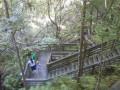 Visiting The Devil's Millhopper Geological State Park, Gainesville, Florida