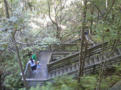 Visiting The Devil's Millhopper Geological State Park, Gainesville, Florida