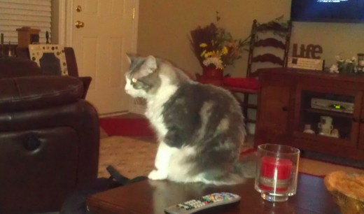 Indoor photo of a fat cat on a coffee table.  Taken with the flash.