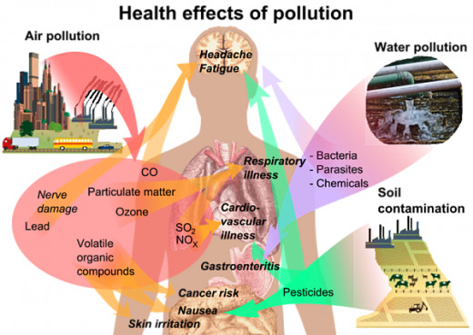How pollution of various types, including pesticides impacts on various organs