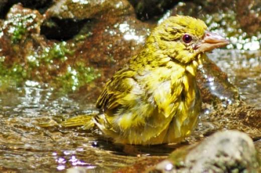 Weaver bath time