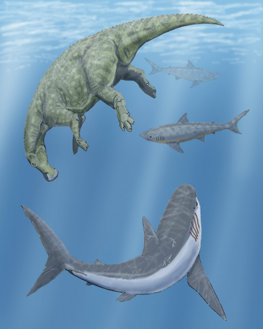 1 Dead hadrosaur Claosaurus and 2 Squalicorax sharks