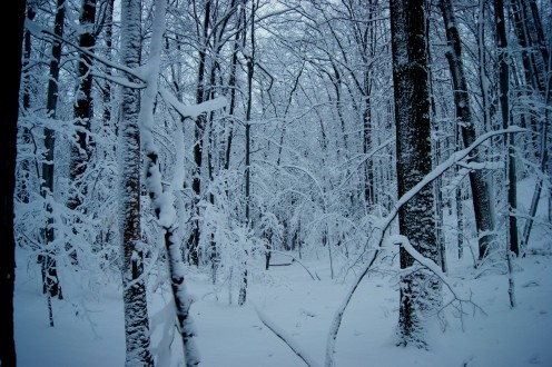 The forests of Northern Michigan are beautiful after a snowfall.