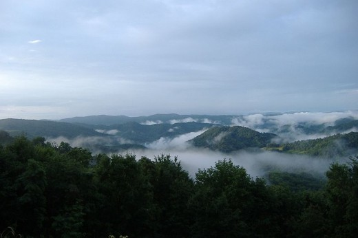 Thick fog along the slopes of Roan Mountain
