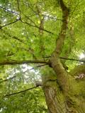 Meditation - The Beauty of Trees