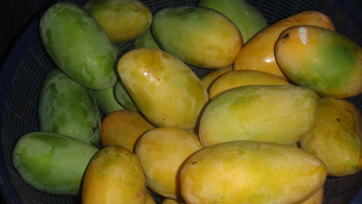 Mangoes are an overlooked fruit in the produce section. Pick some up next time you see them and reward your well being.