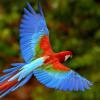 Lazy Parrot profile image
