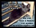 Funny Cat Names Award!
