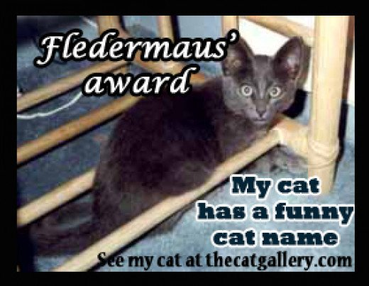 Funny Meme Page Names : Funny cat names award hubpages