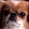 ronyarticleboy profile image