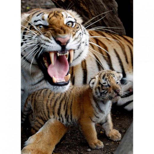 The tigress is very protective when it comes to her cub(s). The photographer learnt.
