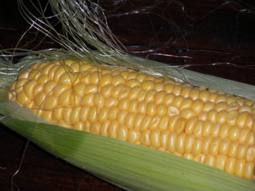 Fresh corn on the cob grown organically