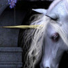 Dark Unicorn profile image