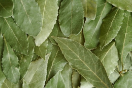 Bay Leaves out of your spice jar.