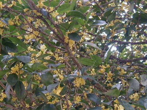 Olive-tree,snapdragon,morguefile.com