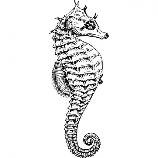 Sea horses have exoskeletons as shown in this excellent drawing.  A wondrous animal of the oceans.