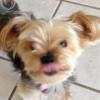 Kona-Allie profile image