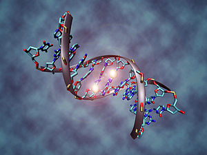 Carbon Footprint DNA
