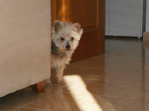 My canine friend Gonzo