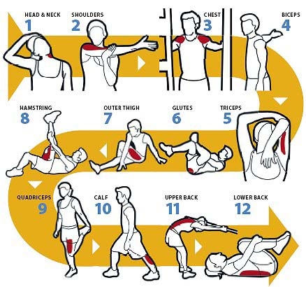Some Examples Of Static Stretches Commonly Used Throughout Exercising.