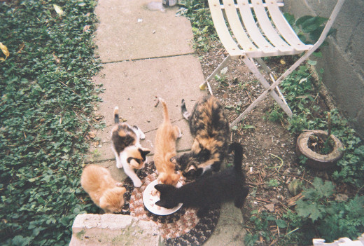 Sugar, Sweetie, Spice, Mama Kittie (now Moni), and Sammy.