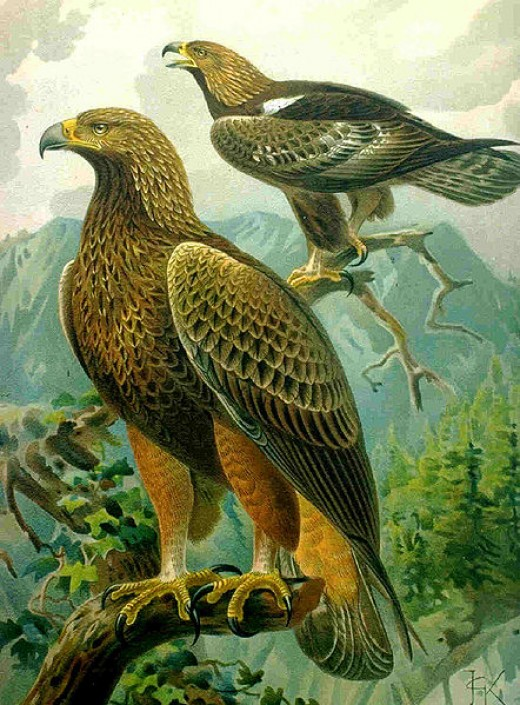 The Golden Eagle lives in Pinnacles, among about 200 other species of birds.