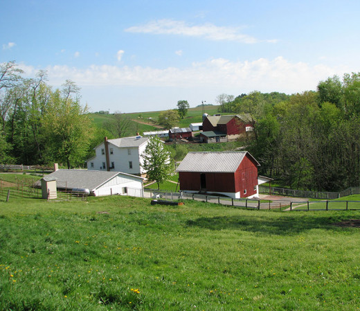 A typical Amish farm with white houses and red barns.