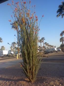 An Amazing Desert Oasis