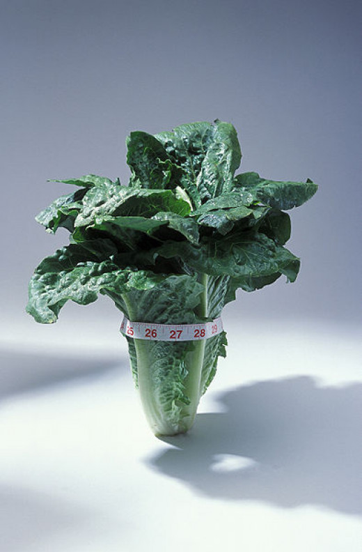 Romaine lettuce is full of nutrients like protein, calcium, vitamin c, iron, and omega-3s