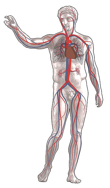 Injury or other medical conditions where loss of blood occurs can also lead to anaemia.