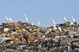 open city dumps
