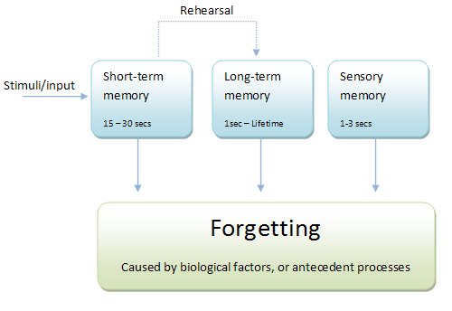 A diagram to show Atkinson and Shiffrin's Multi-Store Model of Memory
