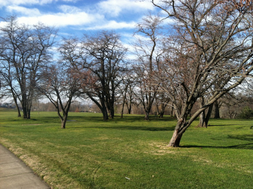 Dormant Trees About to Spring to Life at Fort Walla Walla