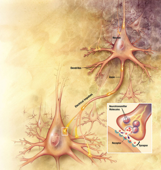 Two nerve cells (neurons) and a close up of the connection between them (synapse). Neurons use chemicals called neurotransmitters to communicate across the gaps between them.