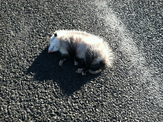A Fallen Comrade (...and He's NOT Just Playing Possum)