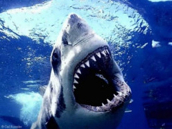 Top 7 Shark Attack Beaches