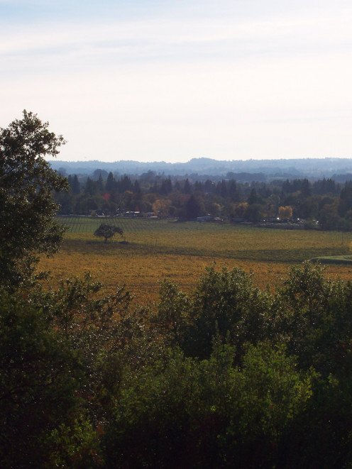 "The view from Shiloh Road, mentioned in Stringfellow's song ""Santa Rosa"" overlooks vineyards. Shiloh Road is actually located in the town of Windsor, a few minutes north of Santa Rosa, on the boarder of the city limits."