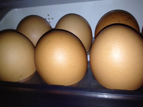Egg-sactly!