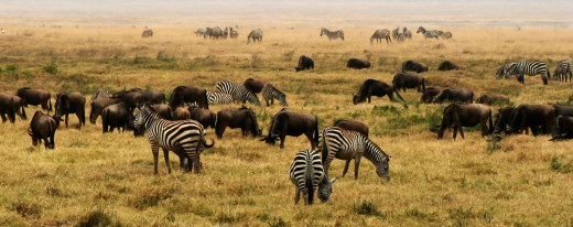 Savanna at Ngorongoro Conservation Area, Tanzania