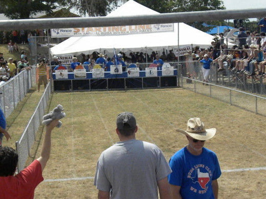 Buda TX Wiener Dog Races