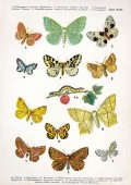 Poetry: A Poem about Butterflies - 'The Love of Broken Things'