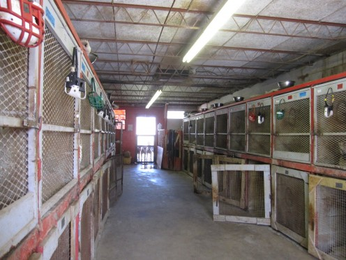 The kennels where greyhounds are housed between races.