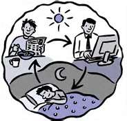 We are designed to have certain sleep and awake times.