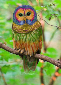 Rainbow Owl  Urban Legend